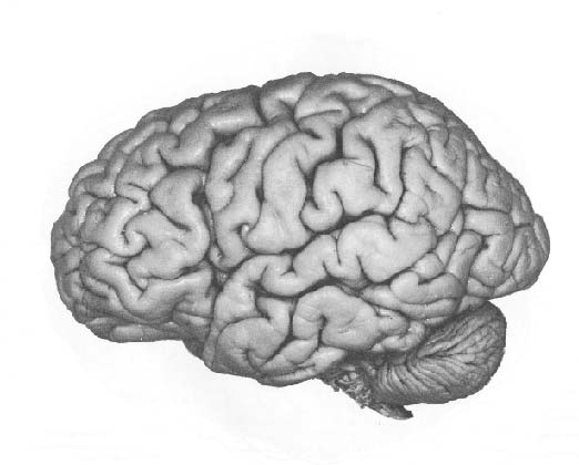 Language and brain pictures of the whole brain ccuart Choice Image